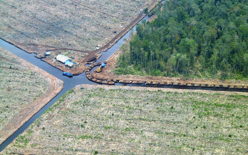 Waldrodungen, Trockenlegungen, Zerstörung: Immer noch häufige Probleme im Palmölanbau