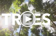 Ecosia: Die grüne Suchmaschine hat 5 Millionen Bäume gepflanzt!