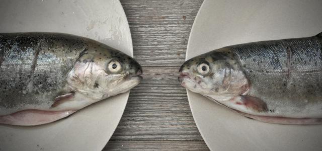 Argumente gegen Fisch