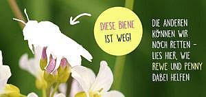 Mit REWE und PENNY die Bienen retten – Erfahrungsberichte von Utopia unterwegs