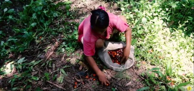 Palmoel Kinderarbeit