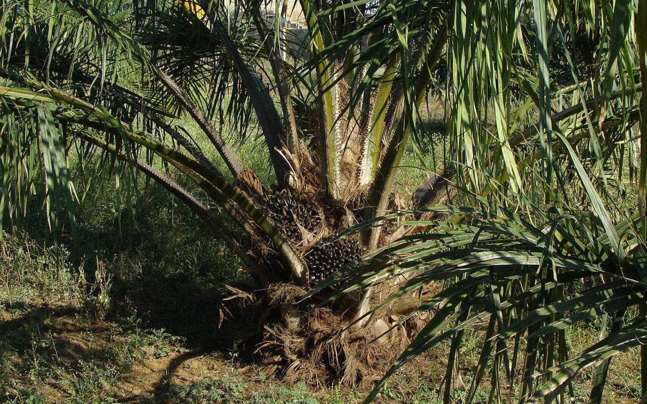 Palmöl: Die tägliche Regenwald-Zerstörung beim Einkauf