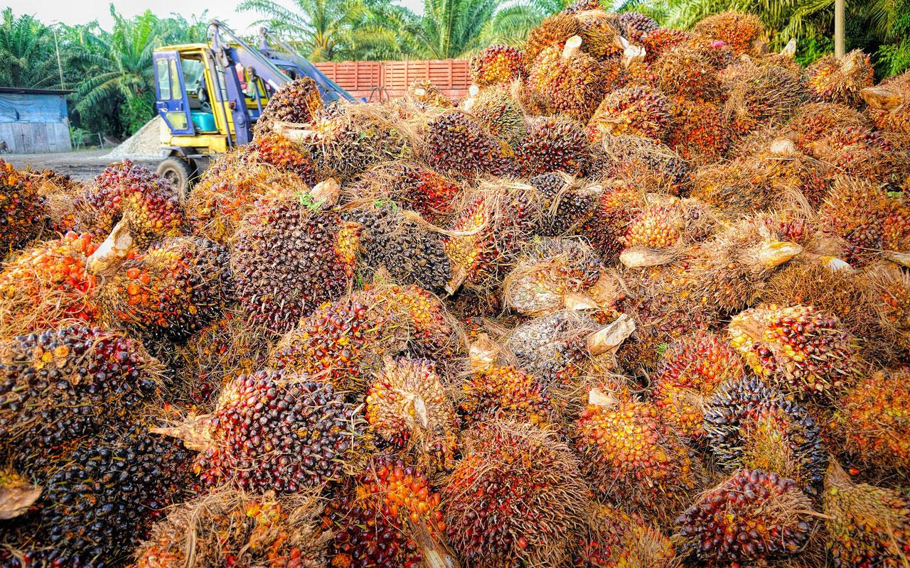 Palmfett   Risiko Palmöl: Krebserregender Stoff in Lebensmitteln ...