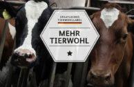 """Staatliches """"Tierwohl""""-Label erst ab 2018, nur in zwei Stufen, eher mau"""