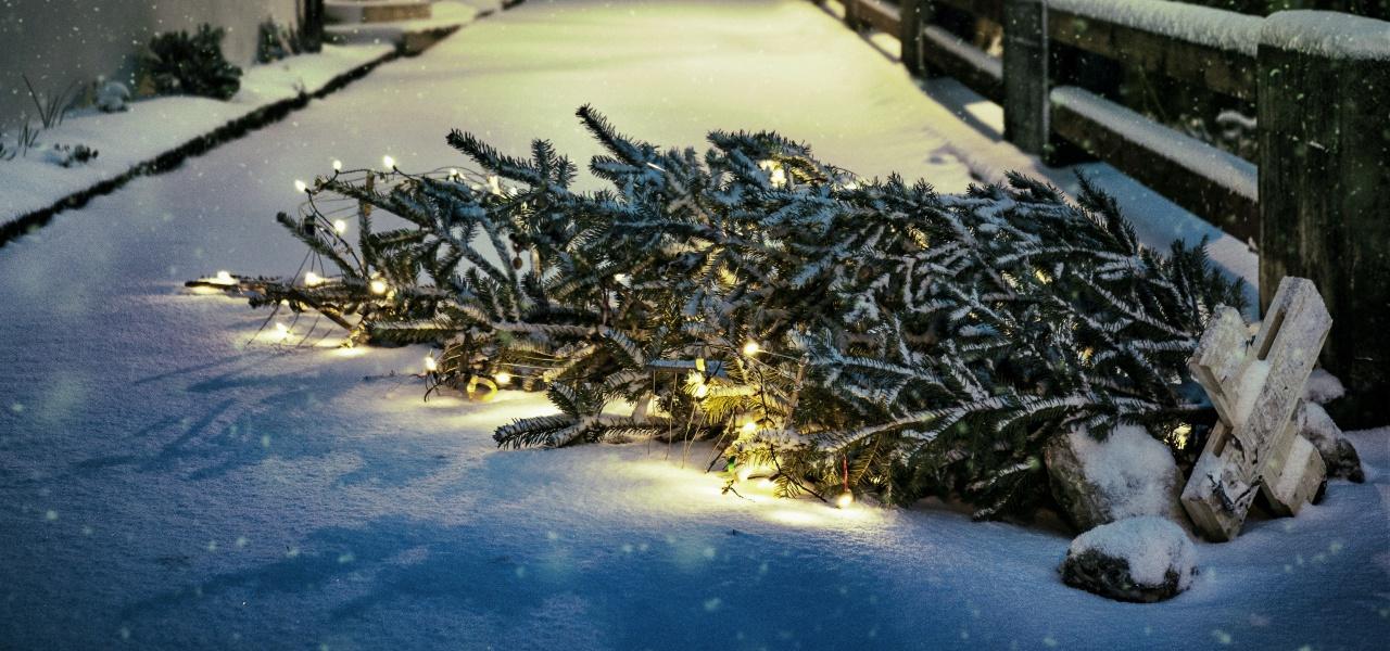 Weihnachtsbaum mieten pforzheim