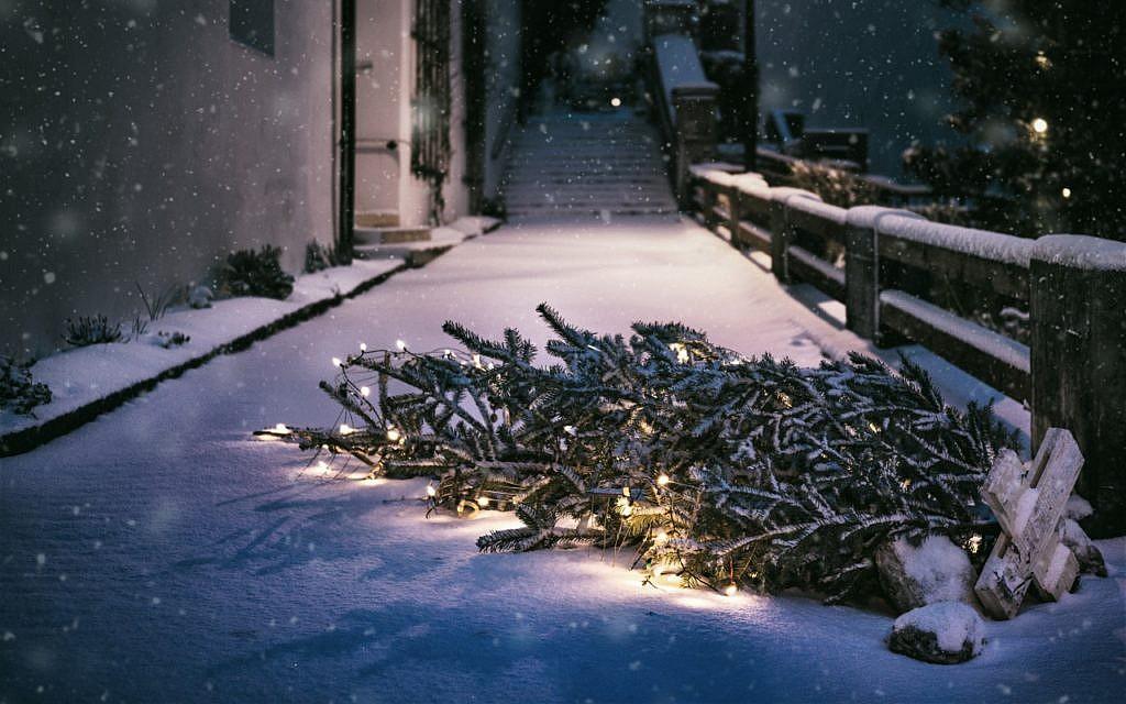 Bio weihnachtsbaum ulm