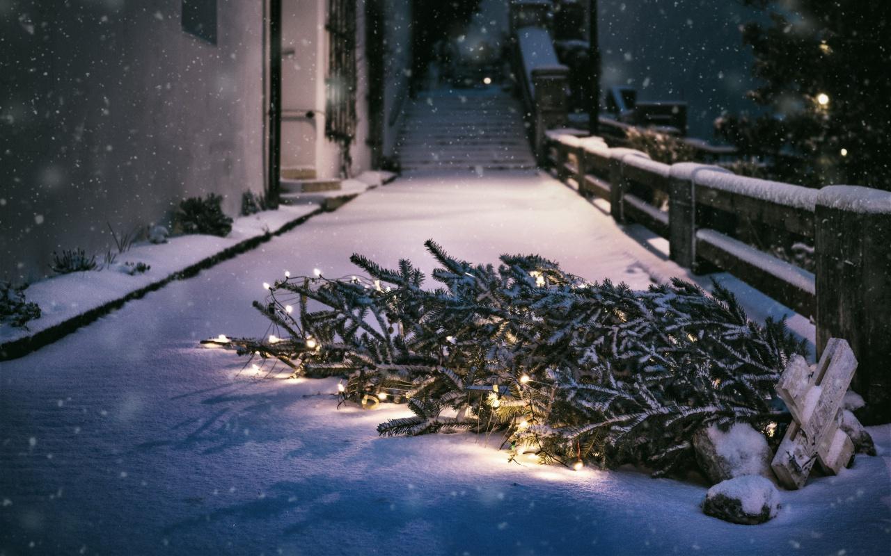 alternativen zum weihnachtsbaum bio ko gemietet aus der region. Black Bedroom Furniture Sets. Home Design Ideas