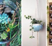 Zimmerpflanzen: kreative Ideen