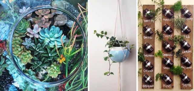 Mehr als nur Deko: 13 kreative Ideen für mehr Grün in der Wohnung ...