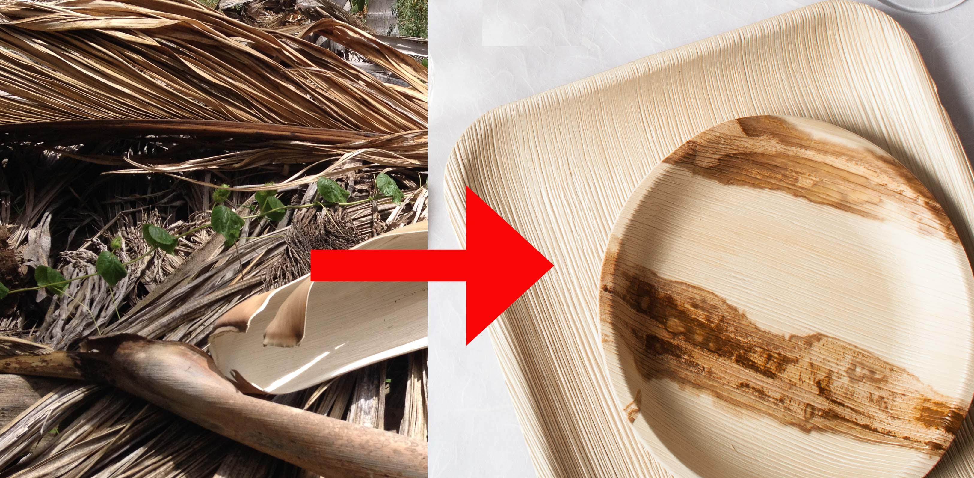Leef Einweggeschirr Aus Palmblatttellern Nachhaltig