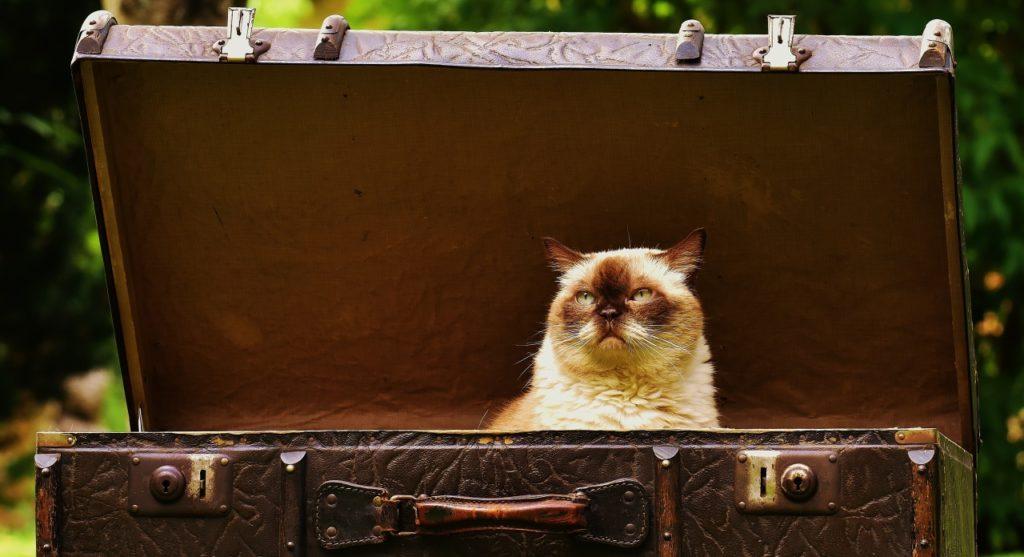 Packliste: Koffer packen – nicht alles, was man mitnehmen möchte, sollte man auch mitnehmen.