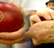 Licht-Labeling statt Verpackung für Bio-Gemüse und Bio-Obst