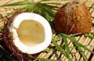 Kokosnuss: Wundermittel, Öko-Sünde oder beides?
