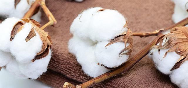 Baumwolle und Bio-Baumwolle: wichtige Fakten