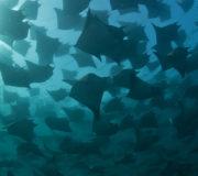 "Ocean Film Tour zeigt ""A Plastic Ocean"""