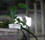 Pflanzen adoptieren