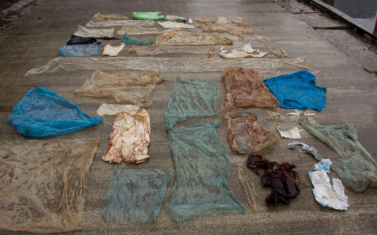 Plastikmüll im Meer: toter Wal mit 30 Plastiktüten im Magen