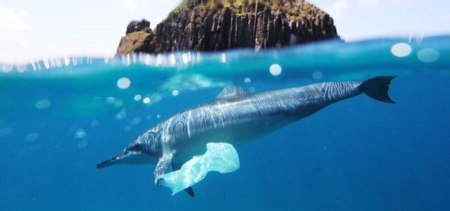 Bioplastik-Tüten besser für die Umwelt? Delfin mit Plastiktüte