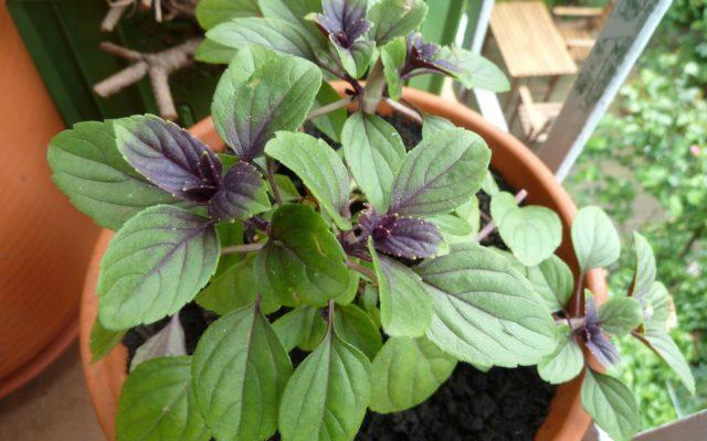 Urban Gardening Kreative Ideen Fur Den Gemuseanbau Auf Deinem