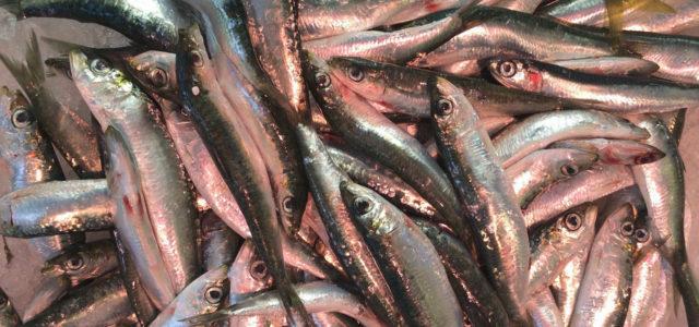 Mittelmeer-Fisch - Überfischung