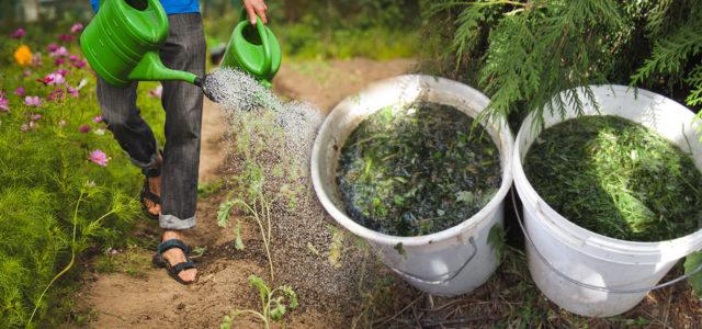 Natürlicher Pflanzenschutz