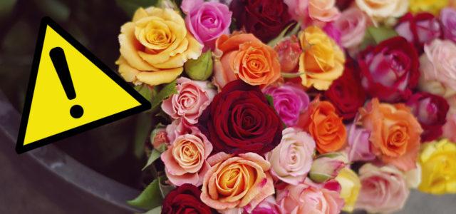 Rosen Blumen Gifte