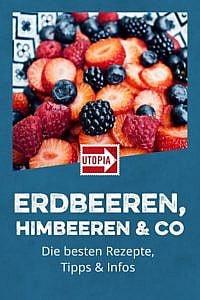 Erdbeeren, Himbeeren & Co: Die besten Rezepte, Tipps & Infos