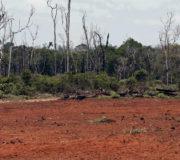 Aufgedeckt: Regenwaldabholzung für Soja als Futtermittel