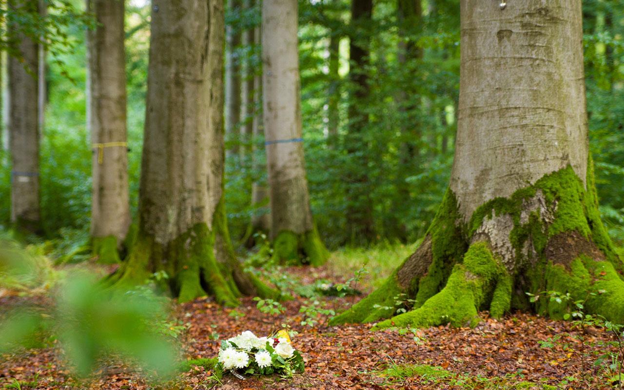 Waldbestattung - Freidwald