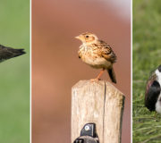 NABU: Rückgang von Vögeln in Deutschland