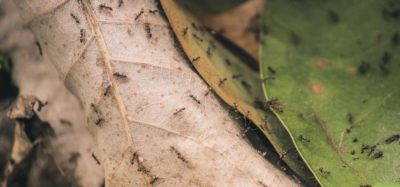 Insekten vertreiben: Mittel gegen Mücken, Wespen und Co. - Utopia.de