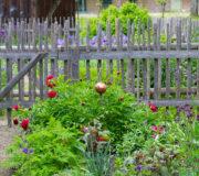 Bauerngarten mit Blumen, Kräutern, strukturierenden Wegen