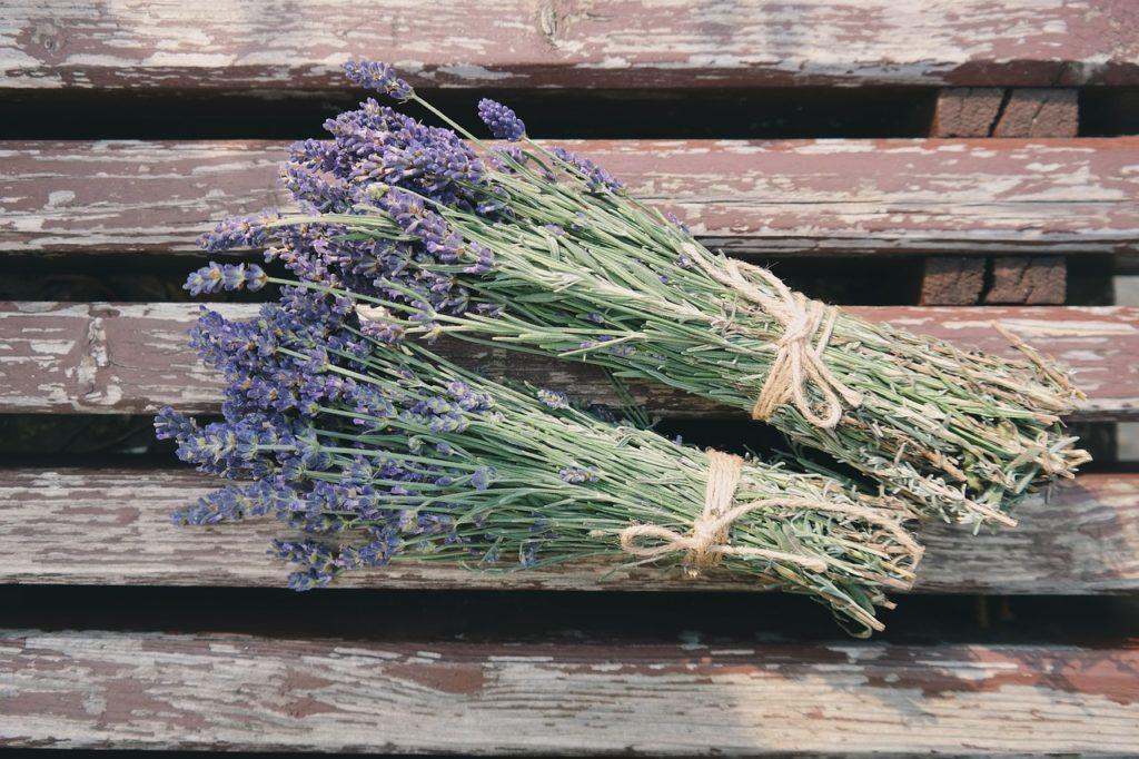 Gegen stress m digkeit schlechte luft diese 5 pflanzen - Lavendel zimmerpflanze ...