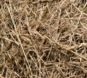 Graspapier Rewe Gras Heu
