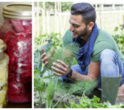 Selbstversorger Tipps gärtnern, fermentieren