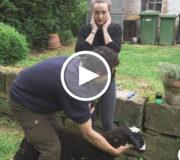 Video: Kann ich ein Tier töten?