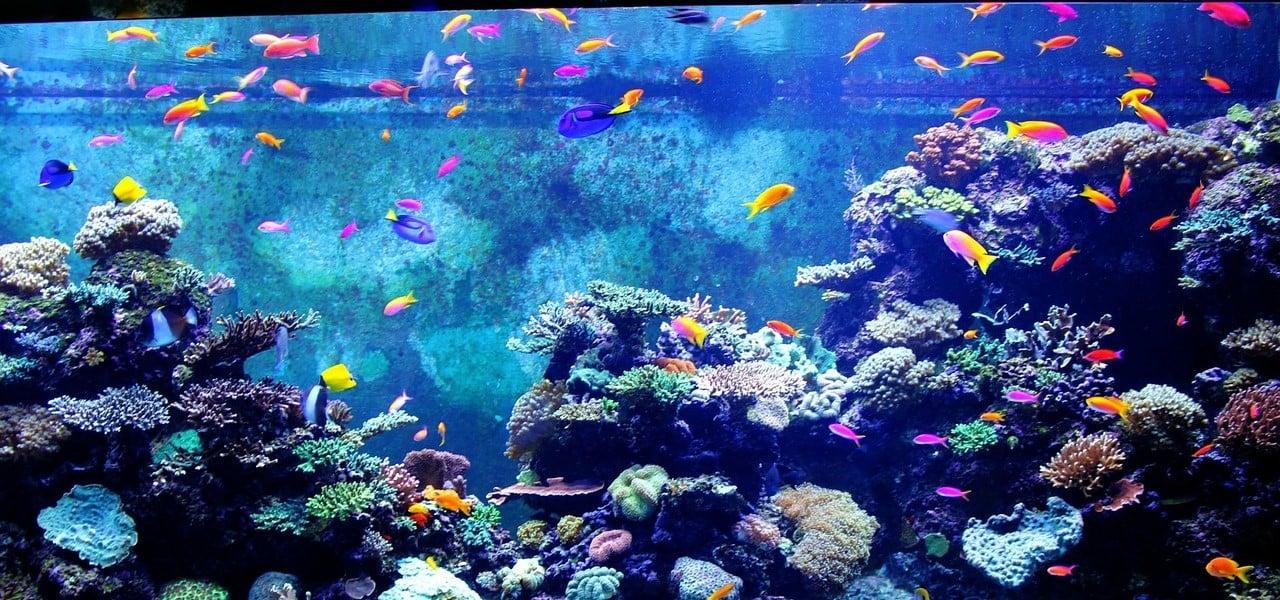 Fischsterben so schlimm sind aquarien wirklich for Aquarium heizen