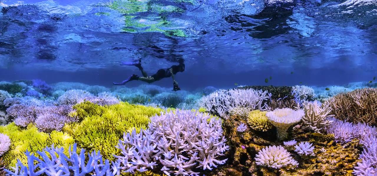Chasing Coral: Meeres-Doku auf Netflix