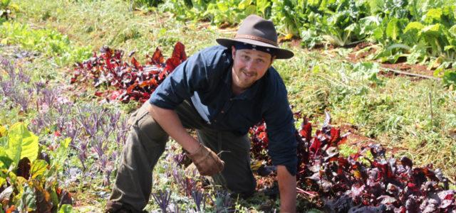 Wwoofing: Reisen und auf ökologischen Farmen arbeiten