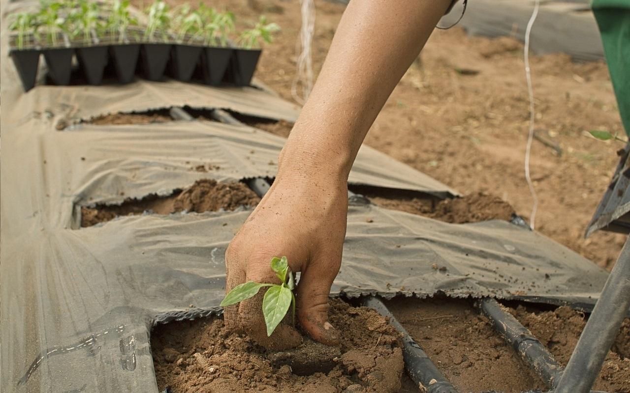 Wwoofing: Reisen und für Kost und Logis auf biologischen Farmen arbeiten