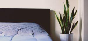 Bestimmte Pflanzen eignen sich gut fürs Schlafzimmer.