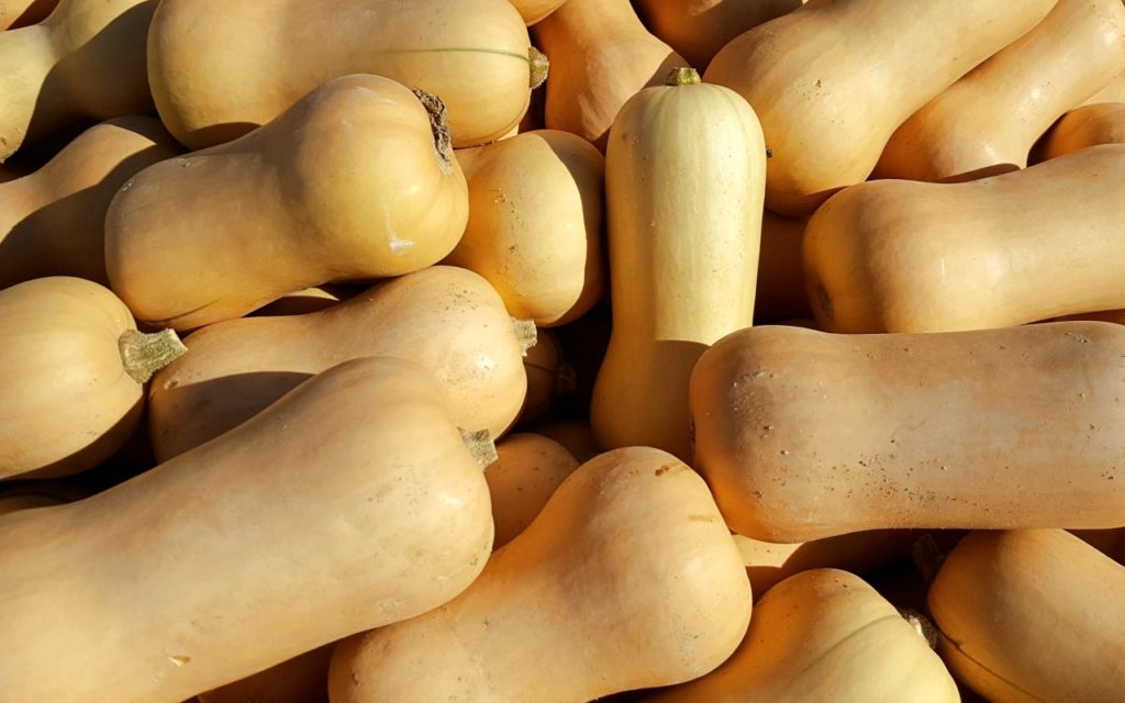 Butternut-Kürbis: Saison im September