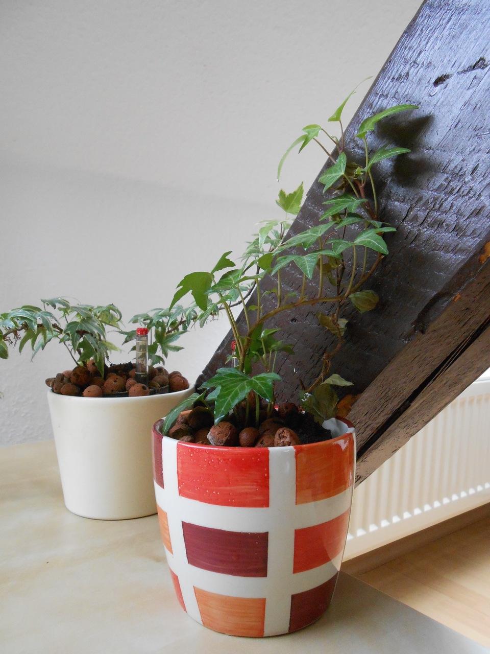 pflanzen im schlafzimmer so hast du einen gesunden schlaf. Black Bedroom Furniture Sets. Home Design Ideas