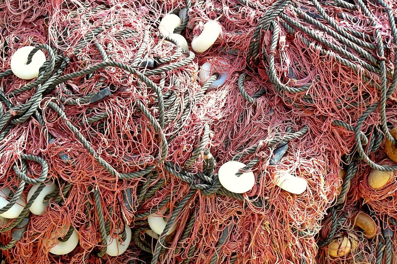 In den Fischernetzen verfangen sich auch seltene Arten, die zu Fischmehl verarbeitet werden