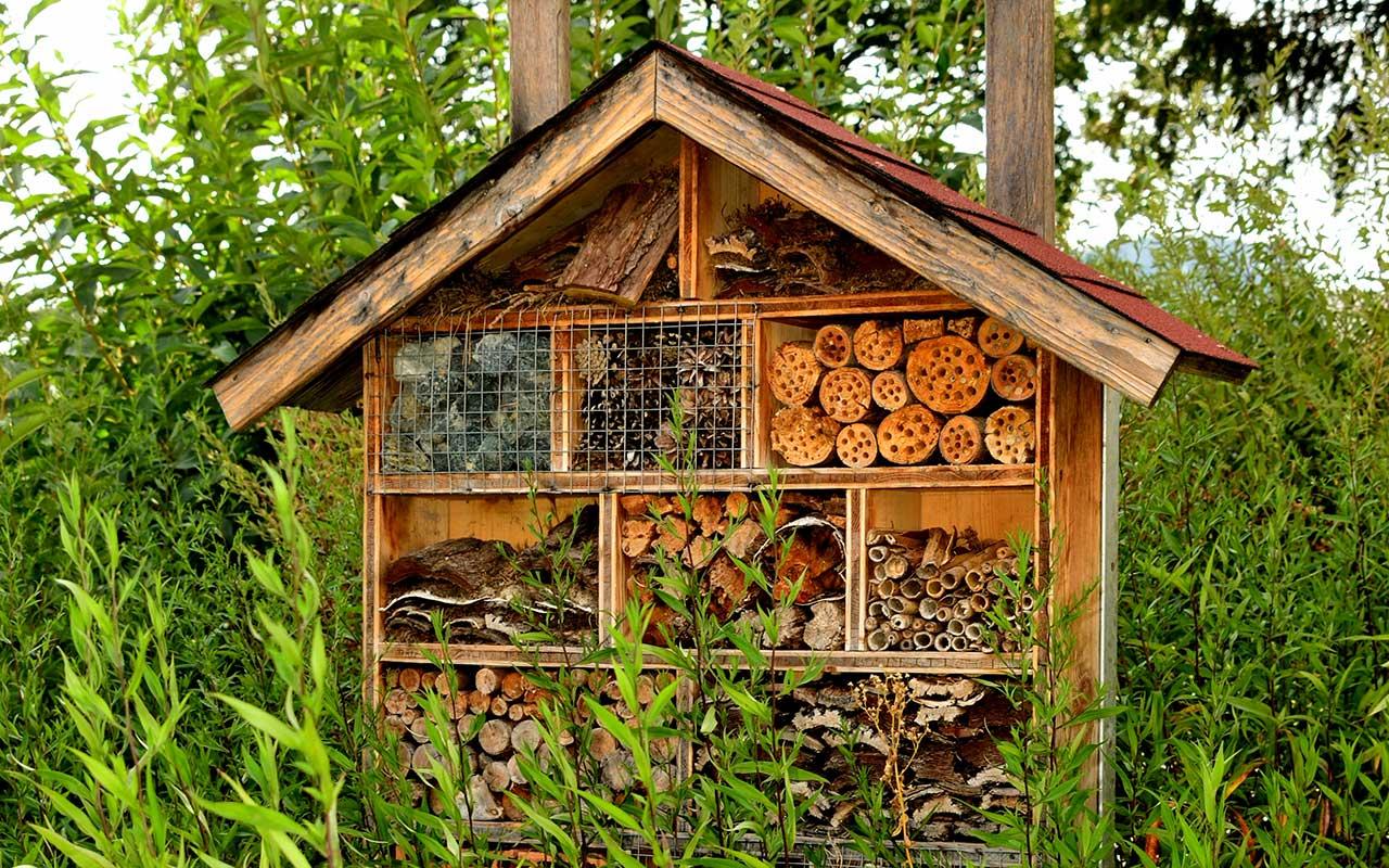 5 tipps was du gegen das insektensterben tun kannst. Black Bedroom Furniture Sets. Home Design Ideas