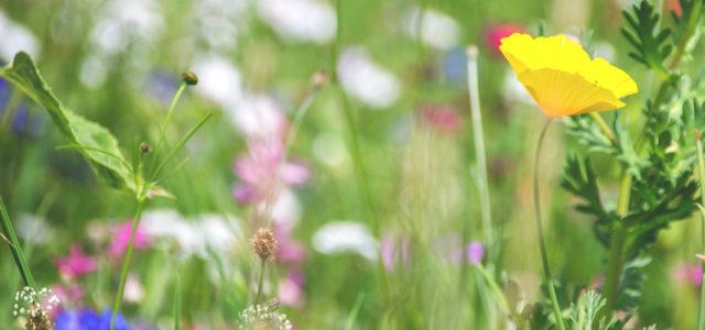 Insektensterben: 5 Tipps, die den Insekten helfen