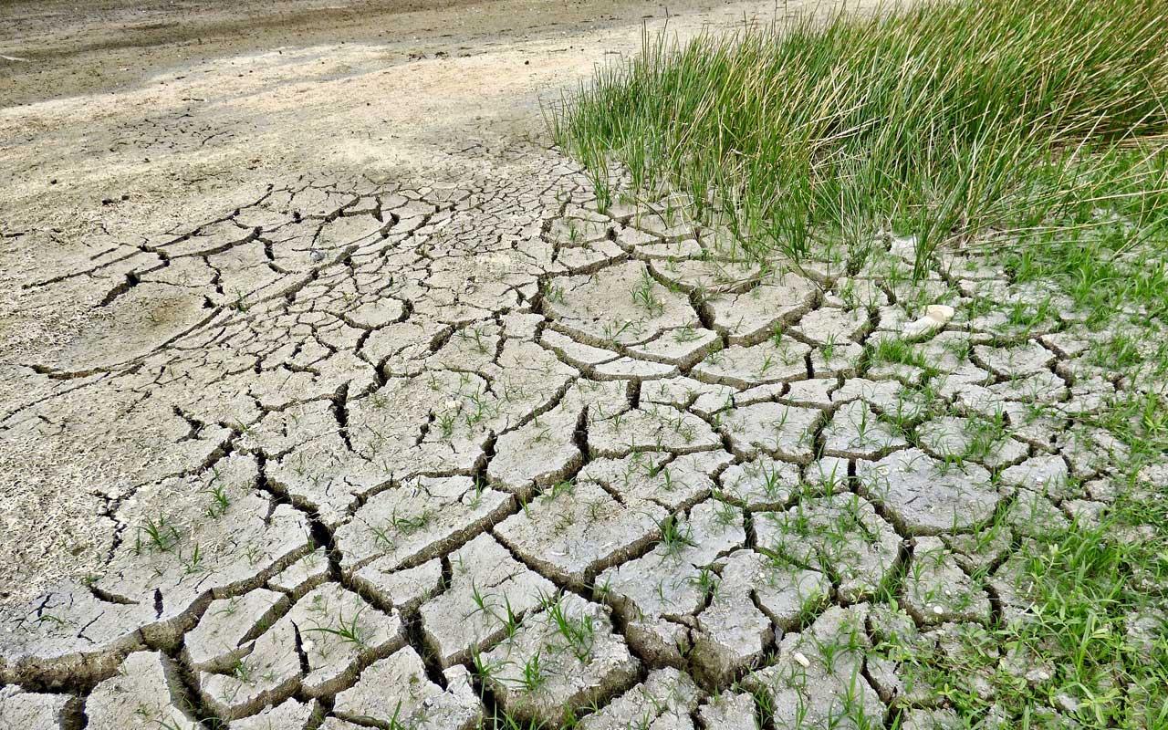 Pflanzenwachstum Dürre