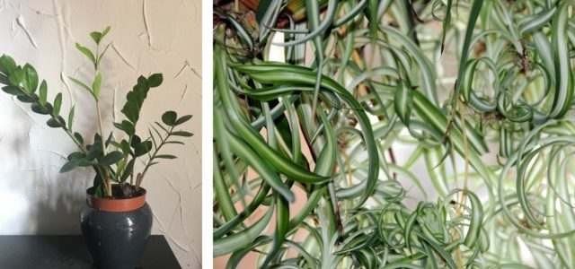 zimmerpflanzen bei wenig licht diese 5 wachsen im schatten. Black Bedroom Furniture Sets. Home Design Ideas