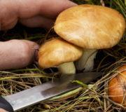 Pilze, Pilze sammeln