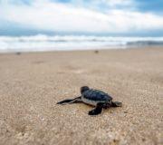 Schildkröte slow